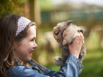 Animal Education for Schools
