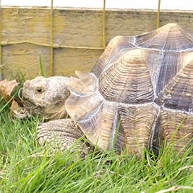 Tortoise Town